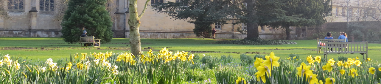 Wadham Gardens with daffodils in foreground